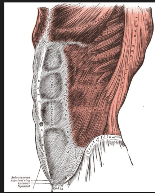 Anatomy Stories: How can I tell the difference between my internal ...