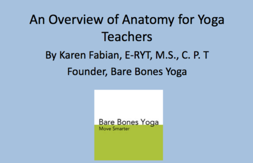 An Overview Of Anatomy For Yoga Teachers Part 1 Bare Bones