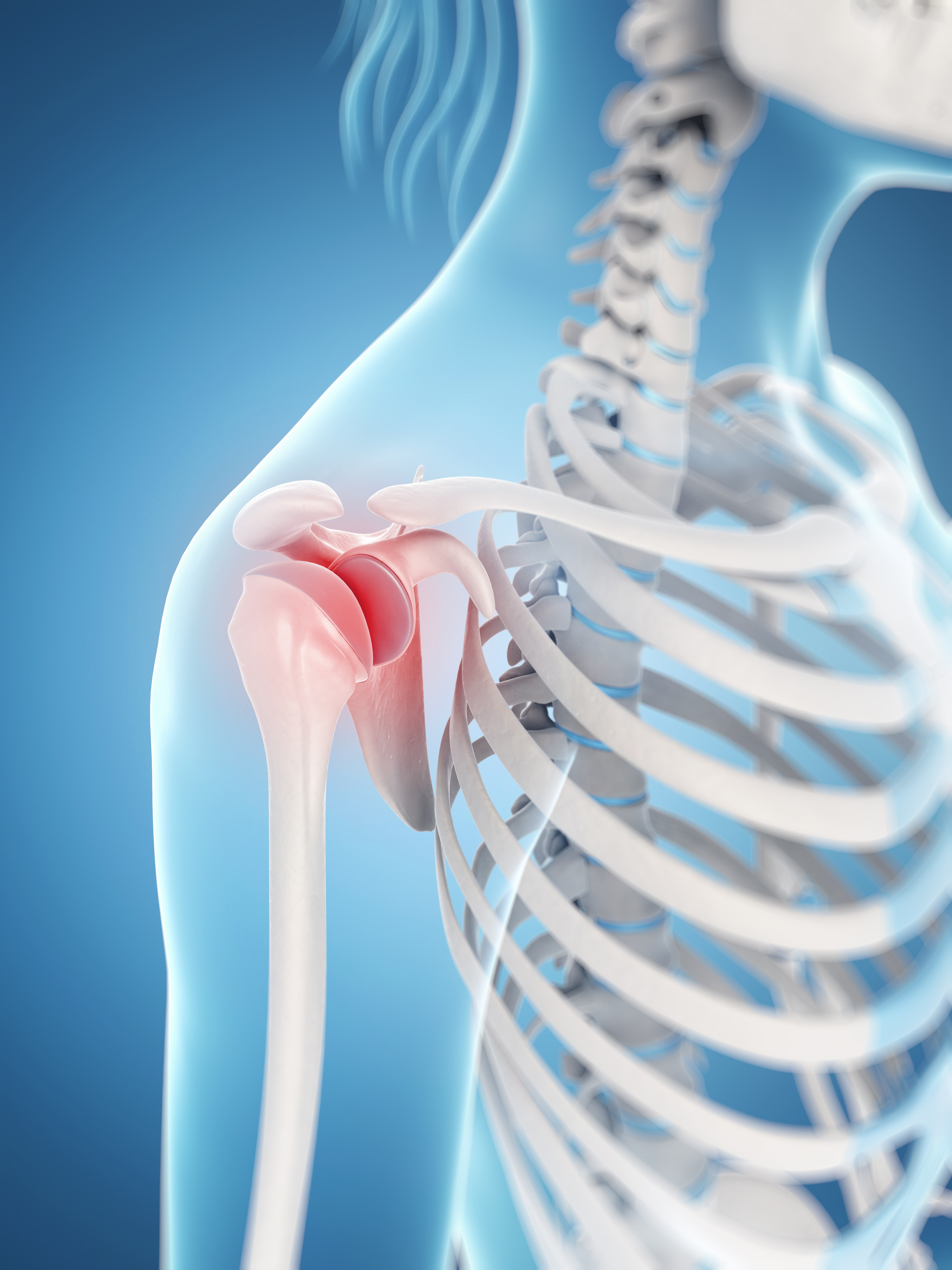 Shoulder Joint-Fotosearch