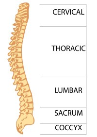 Spine- Fotosearch Image